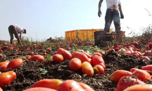 Tavolo Caporalato, il punto sul Piano Triennale contro lo sfruttamento in agricoltura